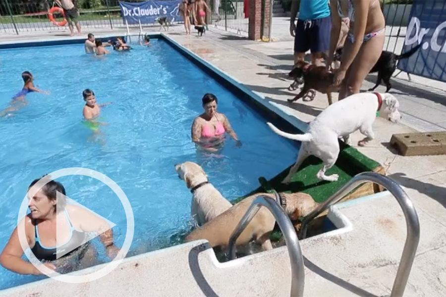 Aquadog, la fiesta de los perros en el agua